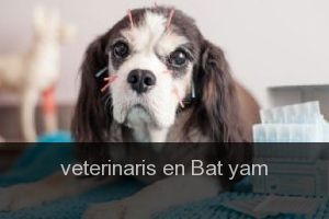 Veterinaris en Bat yam